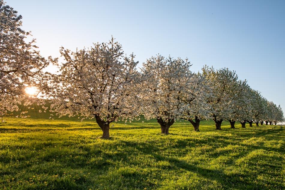 Baselbieter Blütenzauber